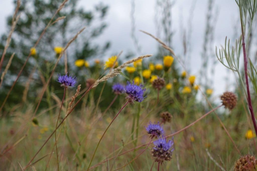 Ostseeflora Polen